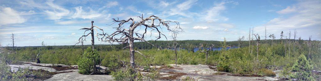 National Park Tyresta by Ingemar Pongratz